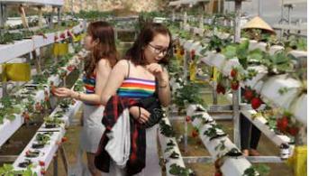 农耕文化旅游——林同省旅游业 新发展方向 hinh anh 5