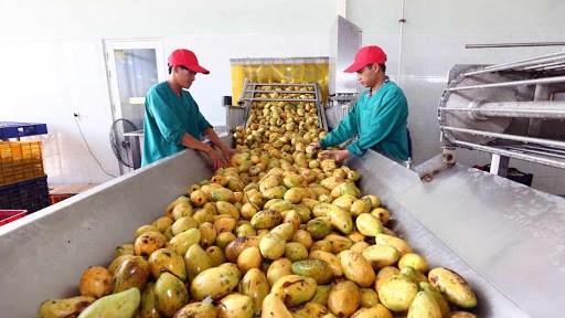越南农业力争进入世界农业发达国家前15行列 hinh anh 2