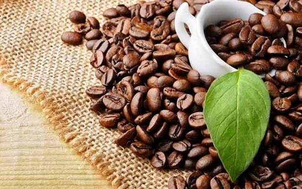 一周农产品价格:咖啡价格上涨 胡椒价格暴跌 hinh anh 1