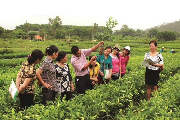 河内重视提升农村劳动者职业培训工作效果 hinh anh 1