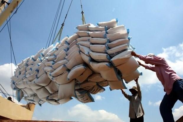 越南有望成为2020年世界最大大米出口国 hinh anh 2
