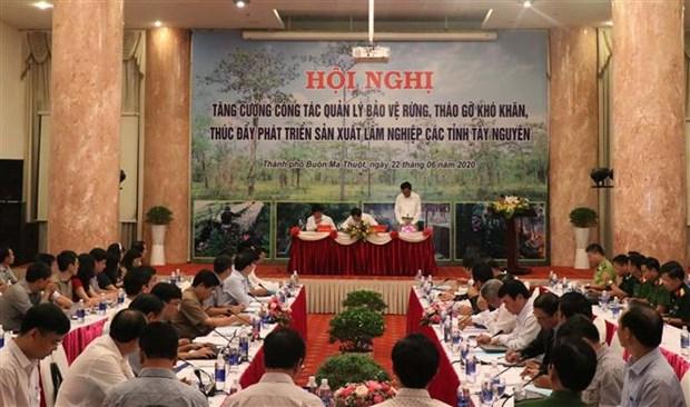 阮春强部长:须确定各单位在森林保护与发展工作中的责任 hinh anh 2