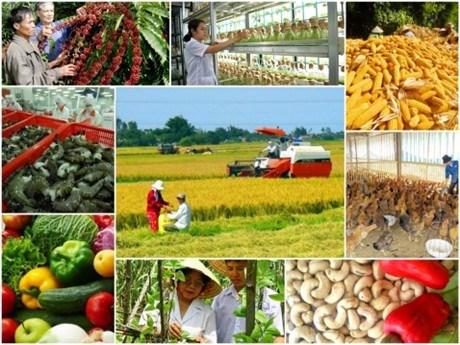 EVFTA给越南农业带来机遇与挑战 hinh anh 1