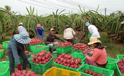 实现市场多样化 越南水果出口的可持续发展方向 hinh anh 1