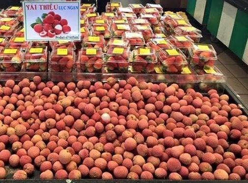 实现市场多样化 越南水果出口的可持续发展方向 hinh anh 2