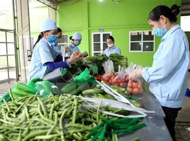 柬埔寨仍未发布任何关于禁止进口越南蔬果的通知 hinh anh 1