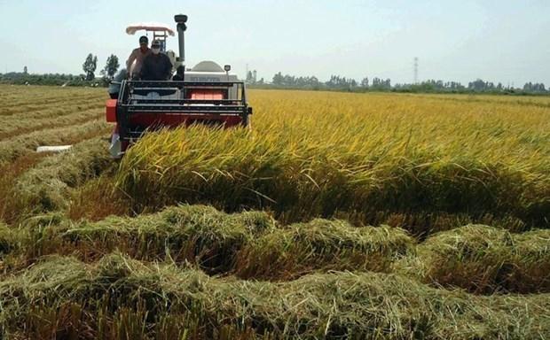 越南自7月1日起开展2020年中期农业调查 hinh anh 1
