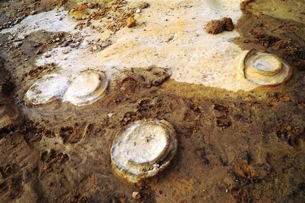 越南发现距今约2亿年的菊石化石 hinh anh 1