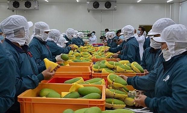 """越南蔬果对""""荷刻""""市场的出口增长良好 hinh anh 2"""