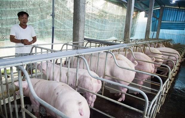 国家非洲猪瘟疫情预防工作计划获批 hinh anh 1