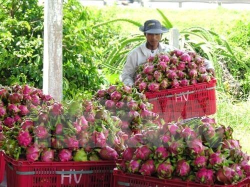 今年前5月越南对泰国的农产品出口额猛增 hinh anh 1
