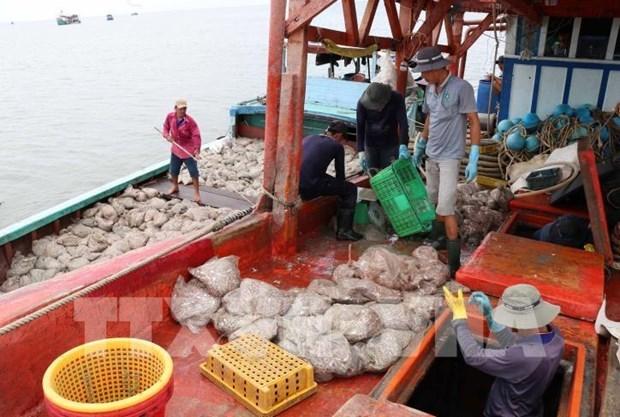 解除黄牌警告:越南渔船船位监测设备安装率超过77% hinh anh 1