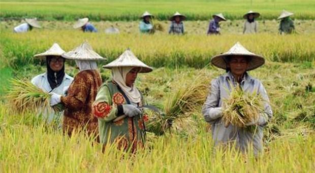 印尼与土耳其一致同意将双边农产品贸易额提升至100亿美元 hinh anh 1
