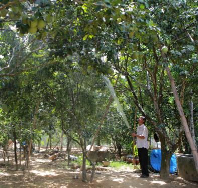 柑橘类果树栽培技术 hinh anh 2