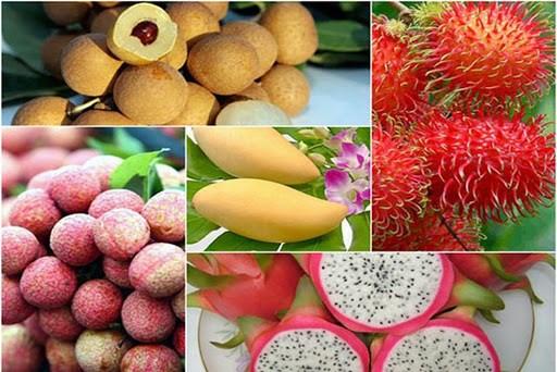 越南蔬果出口呈现出积极信号 hinh anh 1