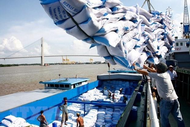 越南向非洲市场的大米出口继续呈大幅增长趋势 hinh anh 1