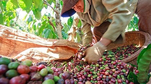 越南农产品颇受阿尔及利亚消费者的青睐 hinh anh 1