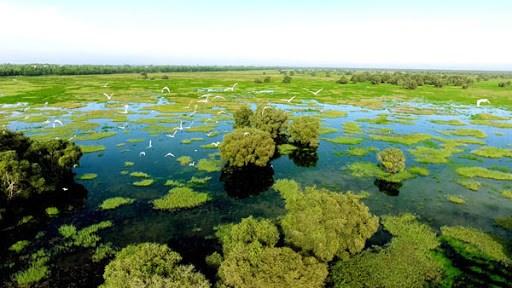 维护芹椰生物圈保护区成为胡志明市的当务之急 hinh anh 2
