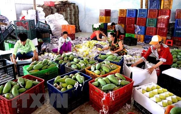 越南贸易顺差额和许多产品出口额创新纪录 hinh anh 1