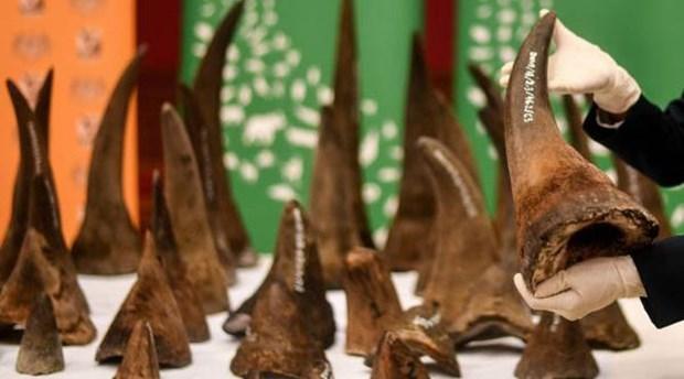 越南有史以来最大犀牛角非法交易案遭起诉 hinh anh 1