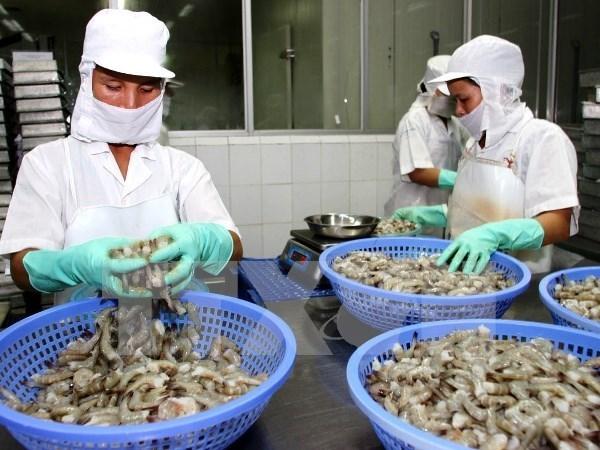 越南对欧盟虾类出口猛增 hinh anh 1