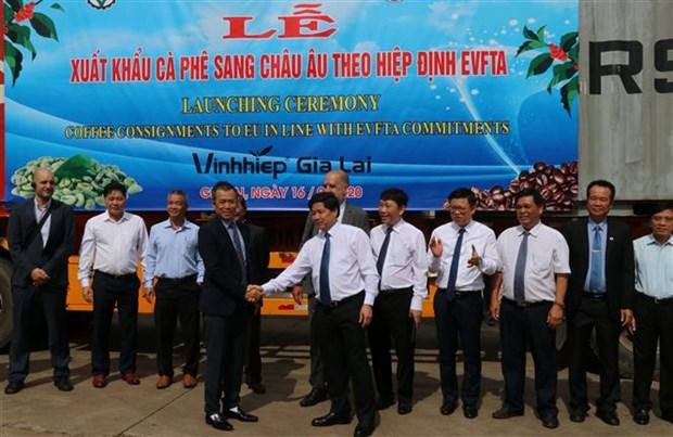越南嘉莱省首批咖啡和西番莲出口到欧盟 hinh anh 1