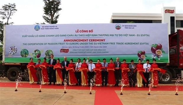 越南嘉莱省首批咖啡和西番莲出口到欧盟 hinh anh 2