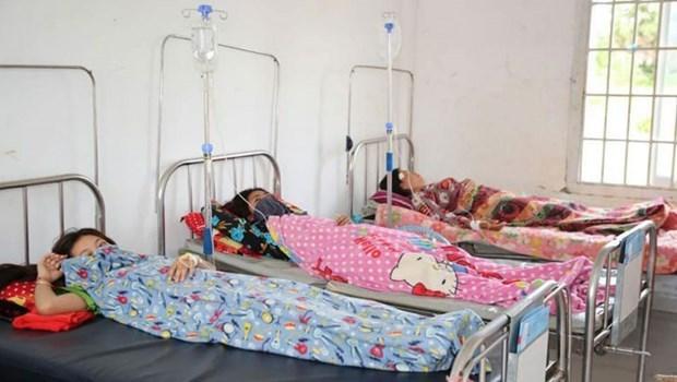 基孔肯雅热疫情在柬埔寨大范围爆发 hinh anh 1