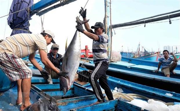 越南金枪鱼出口欧洲的大门敞开 hinh anh 1