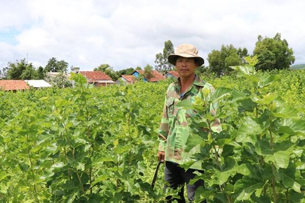 种桑养蚕业可持续发展的方向 hinh anh 1