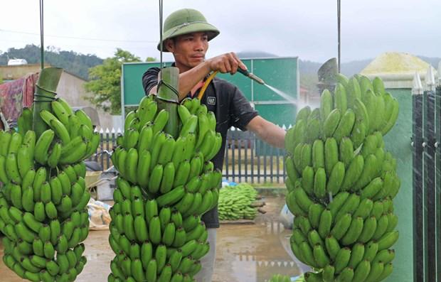 林同省多克娘乡加大农业生产力度以实现脱贫致富 hinh anh 2