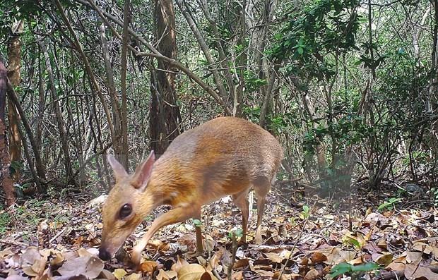 越南与东盟配合遏制生物多样性的丧失 hinh anh 1