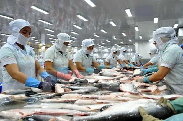 越南对中国的查鱼出口额达近3.86亿美元 hinh anh 1