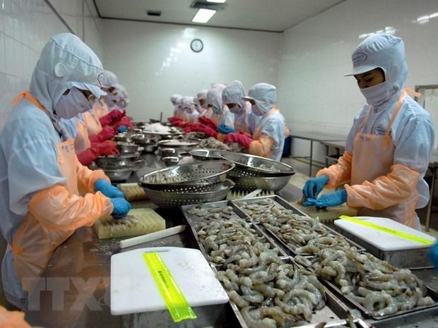 金瓯省虾类出口在后疫情时期迅速恢复 hinh anh 1