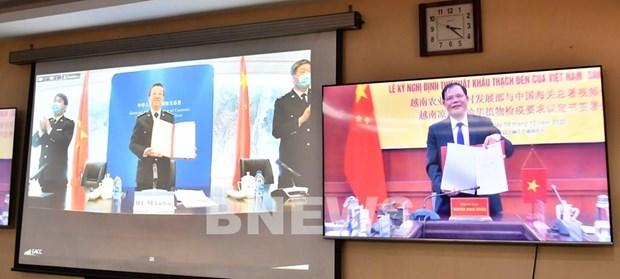 越南与中国签署关于越南向中国出口烧仙草的议定书 hinh anh 2