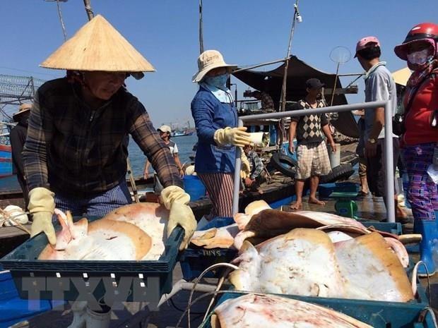 越南鱼业努力克服困难 完成全年既定目标 hinh anh 1