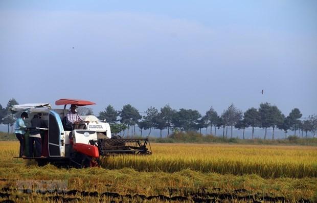 越南召开有关粮食食品系统的第一次国家对话会 hinh anh 1