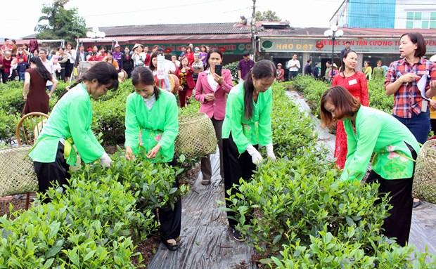 新疆将社区旅游发展与茶叶文化空间相结合 hinh anh 1