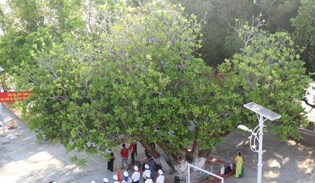 遗产树——长沙群岛的领土主权界碑 hinh anh 1