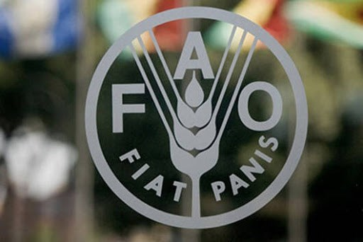 印尼当选2021-2024年阶段联合国粮农组织亚洲代表 hinh anh 1