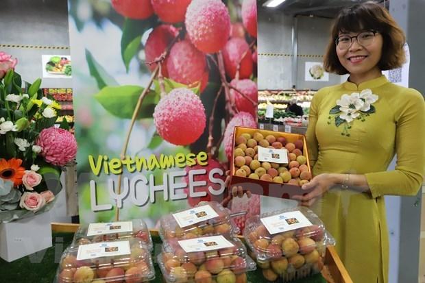 越南新鲜荔枝在澳大利亚市场上十分畅销 hinh anh 1