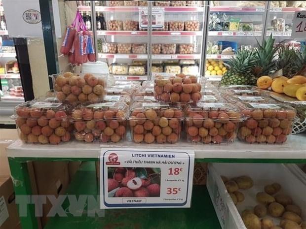 帮助越南企业把产品送到欧洲消费者手中 hinh anh 1