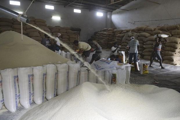 越南工贸部就来自印度的大米进口量突增展开调查 hinh anh 1