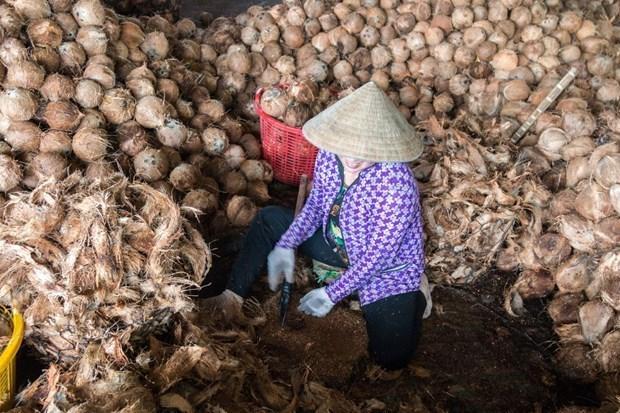 比利时一集团有意将椰维炭生产技术转让给越南 hinh anh 1