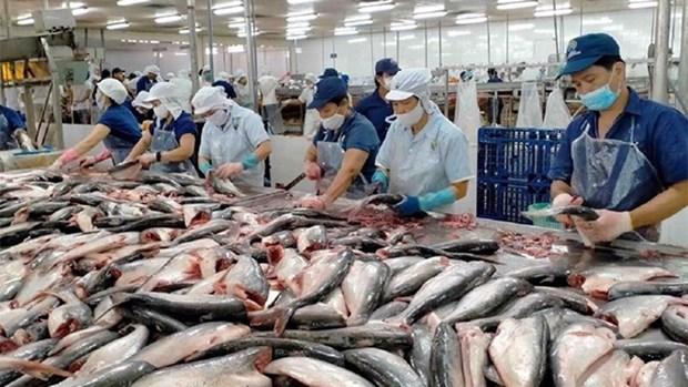 越南查鱼片在中国台湾市场占据99%以上份额 hinh anh 1