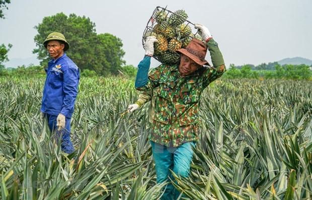 今年前6个月越南农产品出口额达240亿美元 hinh anh 1