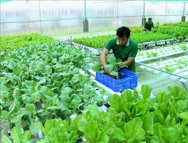 越南有机农产品在澳大利亚市场的发展前景广阔 hinh anh 1