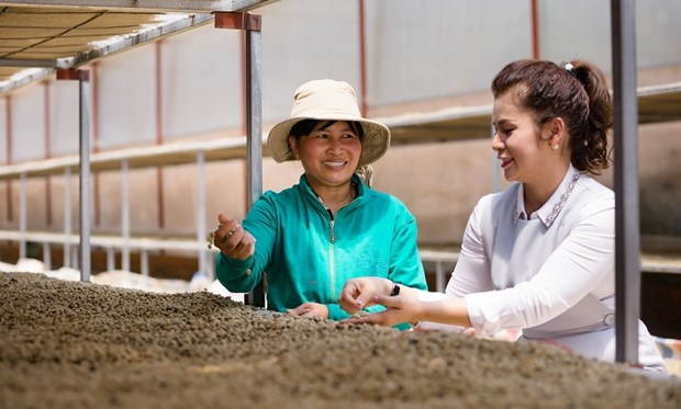 King Coffee公布农产品供应商对接项目 hinh anh 1