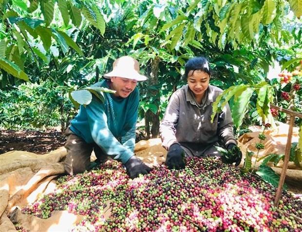 促进越南农水产品对阿尔及利亚和塞内加尔市场的出口力度 hinh anh 1