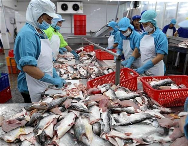 2021年前7个月越南查鱼出口总额达9.3亿美元 hinh anh 1